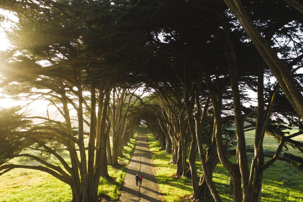 point-reyes-tree-tunnel-engagment-89
