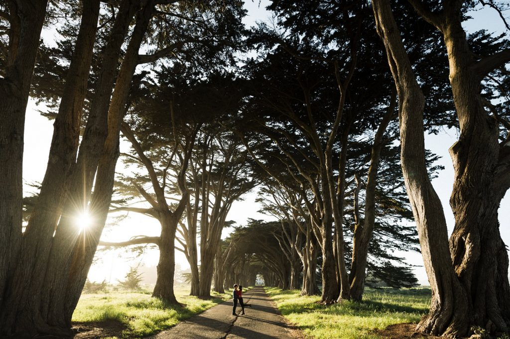 point-reyes-tree-tunnel-engagment-90
